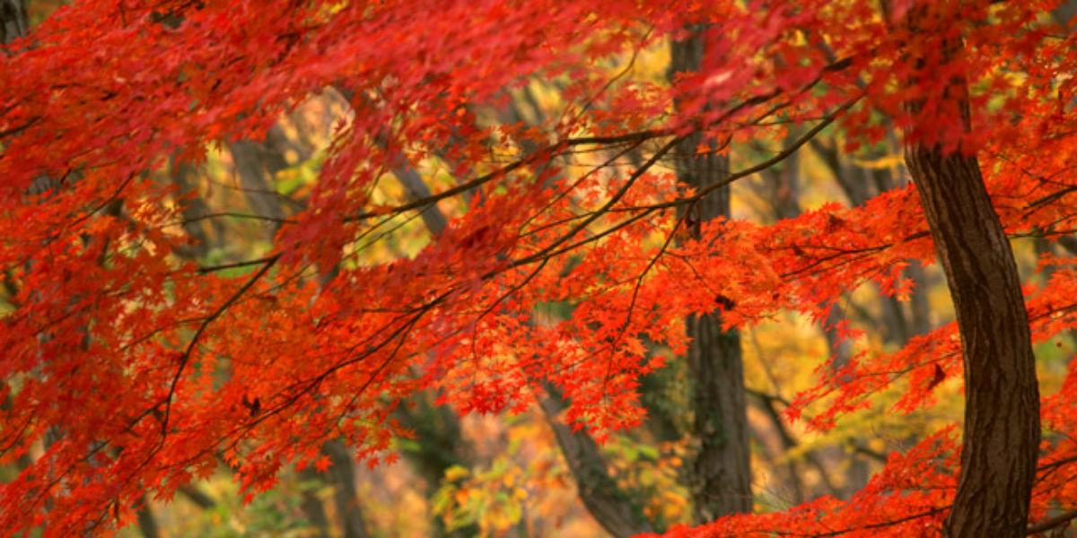 京都が一番美しい季節に、紅葉を愛でつつ美味しいひと時を